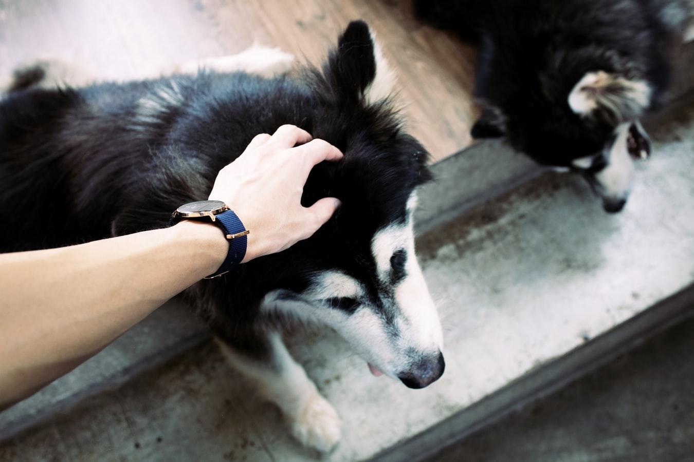 hond welkom in huis